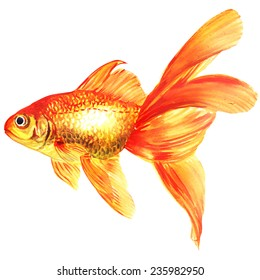 Gold fish. Isolated on the white