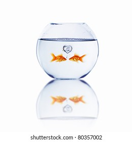 gold fish in love in a fishbowl