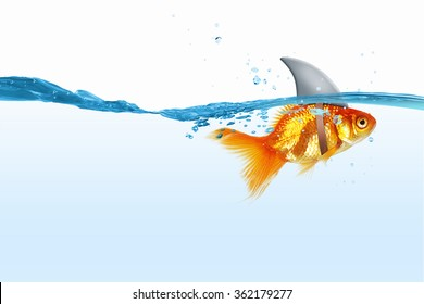 Gold fish with shark flip