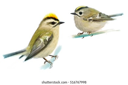 Goldcrests in winter. Digital painting. Isolated on white background.