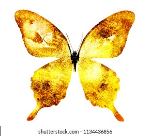 Golden butterfly , isolated on white