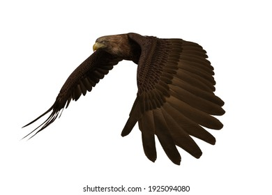 Golden Eagle flapping wings, 3D illustration isolated on white background.