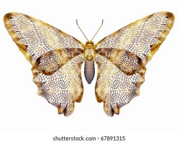 golden, mesh butterfly