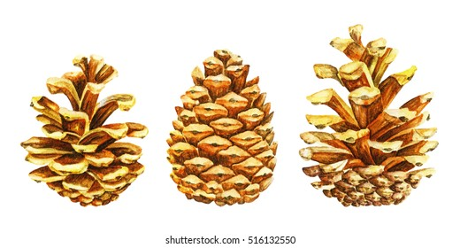 Golden pine tree cones. Christmas symbol. Watercolor illustration