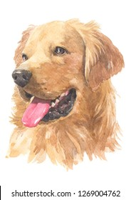 Golden Retriever breed dog painting Water colour technique