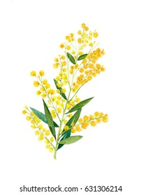 Golden Wattle (Acacia pycnantha) is Australia's national flower