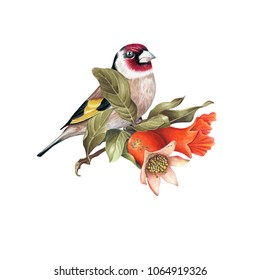 Goldfinch perched on branch of mature pomegranate fruits isolated on white background. Hand drawn illustration for Save the Date, Valentine day Card, Wedding invitation, Cover. Poster & textile design