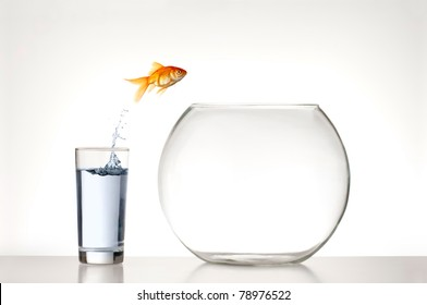 Goldfish jumping from a glass of water into an empty fishbowl