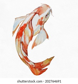 Goldfish,koi fish, watercolor picture on white background.