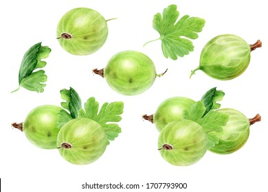 Gooseberry with leaf watercolor illustration isolated on white background