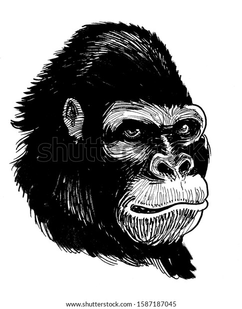 Gorilla face. Ink black and white drawing