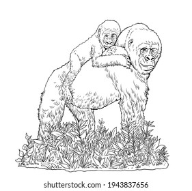 Gorilla female with her baby. Endangered Species Drawing. African animals. Picture for coloring.