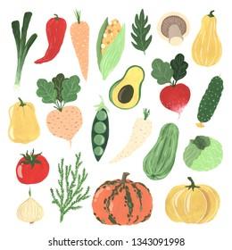 Gouache hand painted organic freshness vegetables elements set isolated. Radish, cabbage, pumpkin, carrot, zucchini, onion, pepper, tomato, peas, cucumber, corn, avocado, mushrooms.