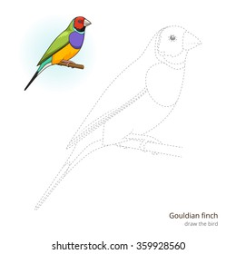 Gouldian Finch Learn Birds Educational Game To Draw Raster Illustration
