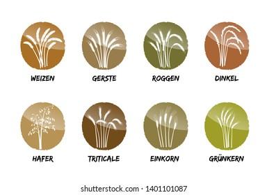 grain triticale arable agriculture field farmer bread flour grow healthy food cereal corn