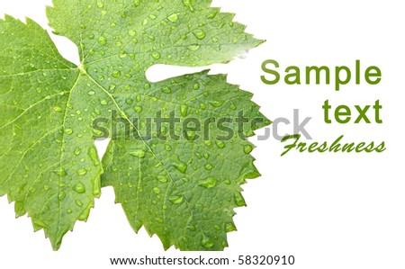 Grape Leaves With Drops Of Rain Template Design Card