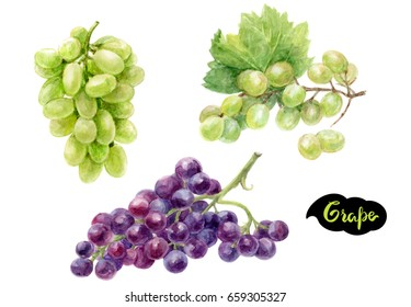 Grape watercolor illustration. Grape branches set hand draw watercolor isolated on white background.
