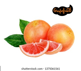 grapefruit watercolor hand draw illustration isolated on white