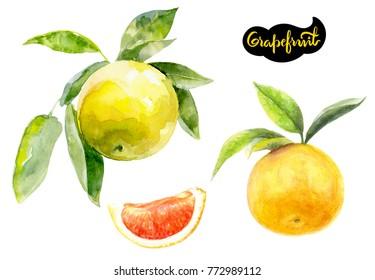 Grapefruit watercolor illustration. Citrus fruit branch grapefruit, grapefruit slice isolated on white background.