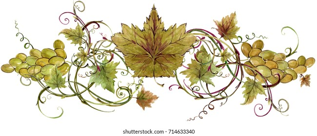 grapes and vine border illustration. watercolor  vineyard background.