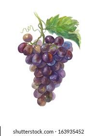 Grapes. Watercolor.