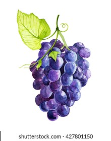 grapes watercolor