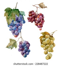 grapes, watercolor, bunch
