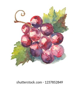 Grapes watercolor on an isolated background