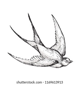 Graphic bird boho illustration - black and white isolated swallow for wedding, anniversary, birthday, invitations, logo, baby shower, etc.
