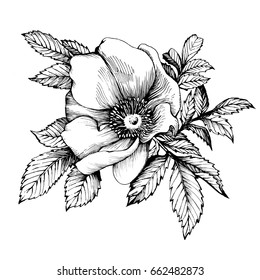 Graphic the branch flower dog rose rugosa. Coloring book page doodle for adult and children, or for printing on t-shirts. Black and white outline illustration.