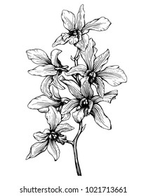 Graphic of the branch tropical orchid flower (Phalaenopsis Dendrobium). Black and white outline illustration, hand drawn work isolated on white background.