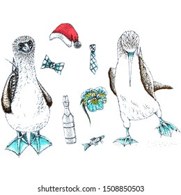Graphic composition of blue-footed boobies and wardrobe items using the pointillism technique