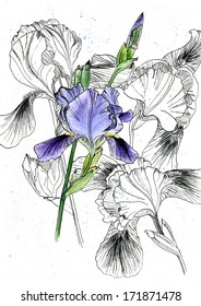graphic composition of iris flowers
