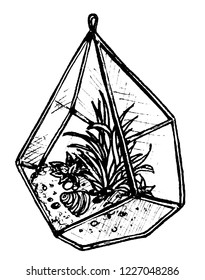 Graphic drawing of an angular florarium with succulents in it. Illustration isolated on white.