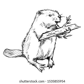 Graphic drawing of a baby beaver with a tree branch. Illustration isolated on white.
