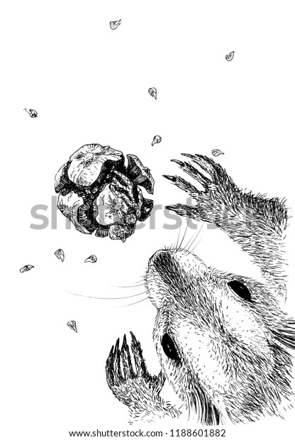 Graphic Drawing Squirrel Lump Cypress Stock Illustration