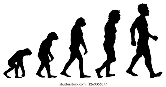 Graphic of human evolution, detail of the history of evolution, education, illustration