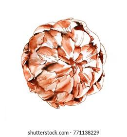 Graphic ink sketch artichoke on white background
