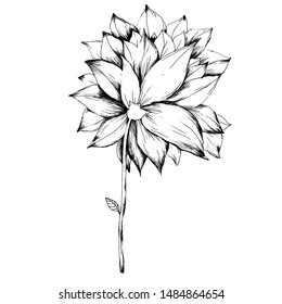 Graphic line flower picture.Black and white botanical flower illustration.Hand drawn outline great picture for wrapping, fabric, fashion, paper, textile. Isolated floral elements for design.