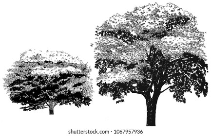 graphical walnut trees for architects