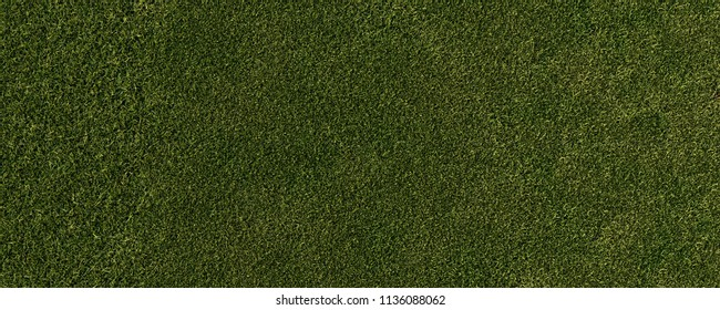 Gras from birds eye view (3D Rendering)