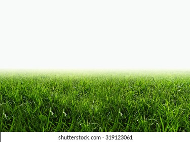 grass field isolate