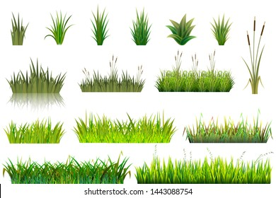Grass grassland or grassplot and green grassy field illustration gardening set floral plants in garden isolated on white background