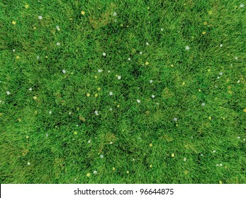 grass and small flowers simulated by computer graphics