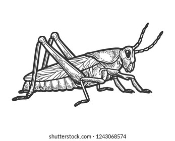 Grasshopper locust insect engraving raster illustration. Scratch board style imitation. Black and white hand drawn image.
