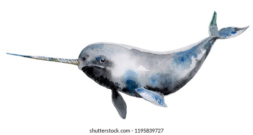 Gray narwhal isolated on a white background, watercolor