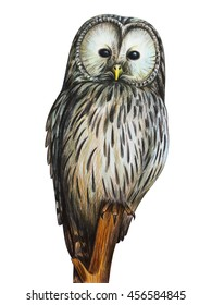 Colored Pencil Drawing Owl High Res Stock Images Shutterstock