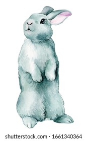 Gray rabbit isolated on white background, watercolor illustration, greeting card.