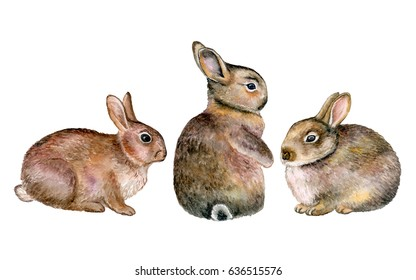 Gray rabbits isolated on white background. Three. Watercolor. Illustration. Handmade. Realistic