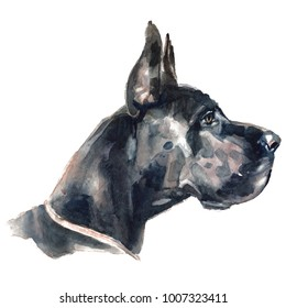 Great Dane - hand-painted watercolor dog